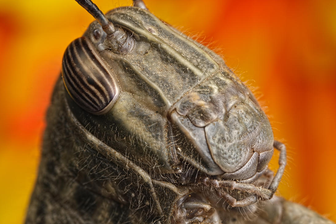 Grasshopper Mugshot by dalantech