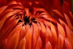 Flame by dalantech