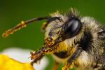 Feeding Polinator