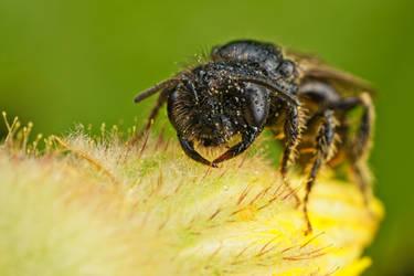 Tiny Bees Series 1-2 by dalantech