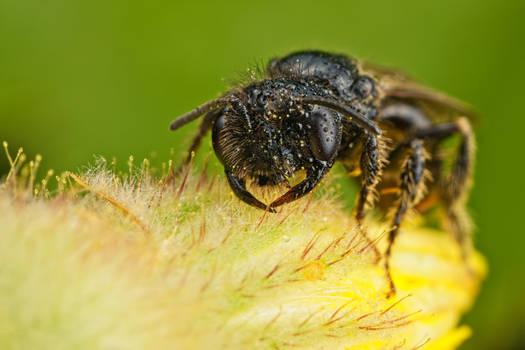 Tiny Bees Series 1-2