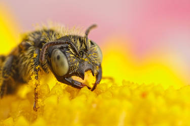 Tiny Bees Series 1-4 by dalantech