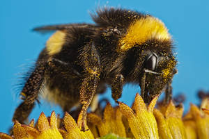 Pollinators Series 2-1 by dalantech