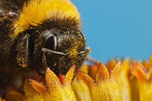 Pollinators Series 2-2 by dalantech