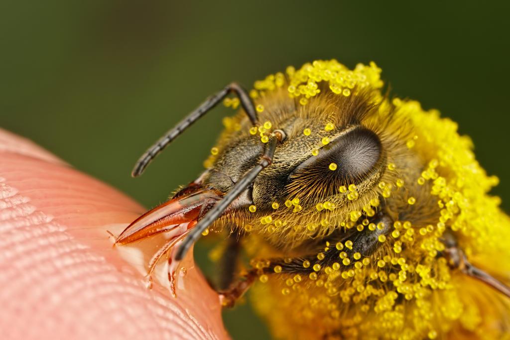 Pollinators Series 3-2