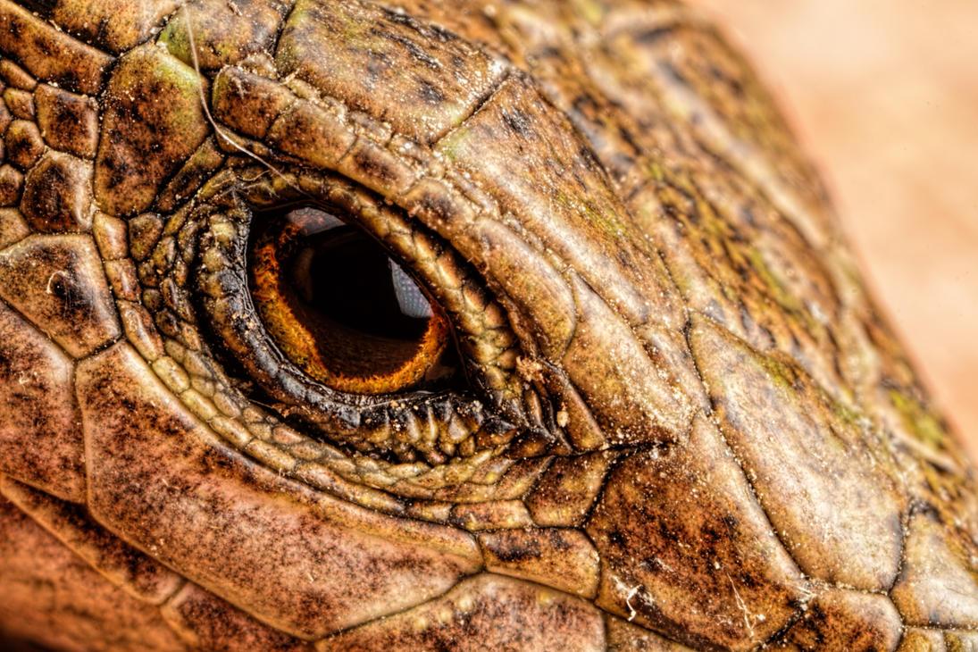 Eye of the Dragon by dalantech