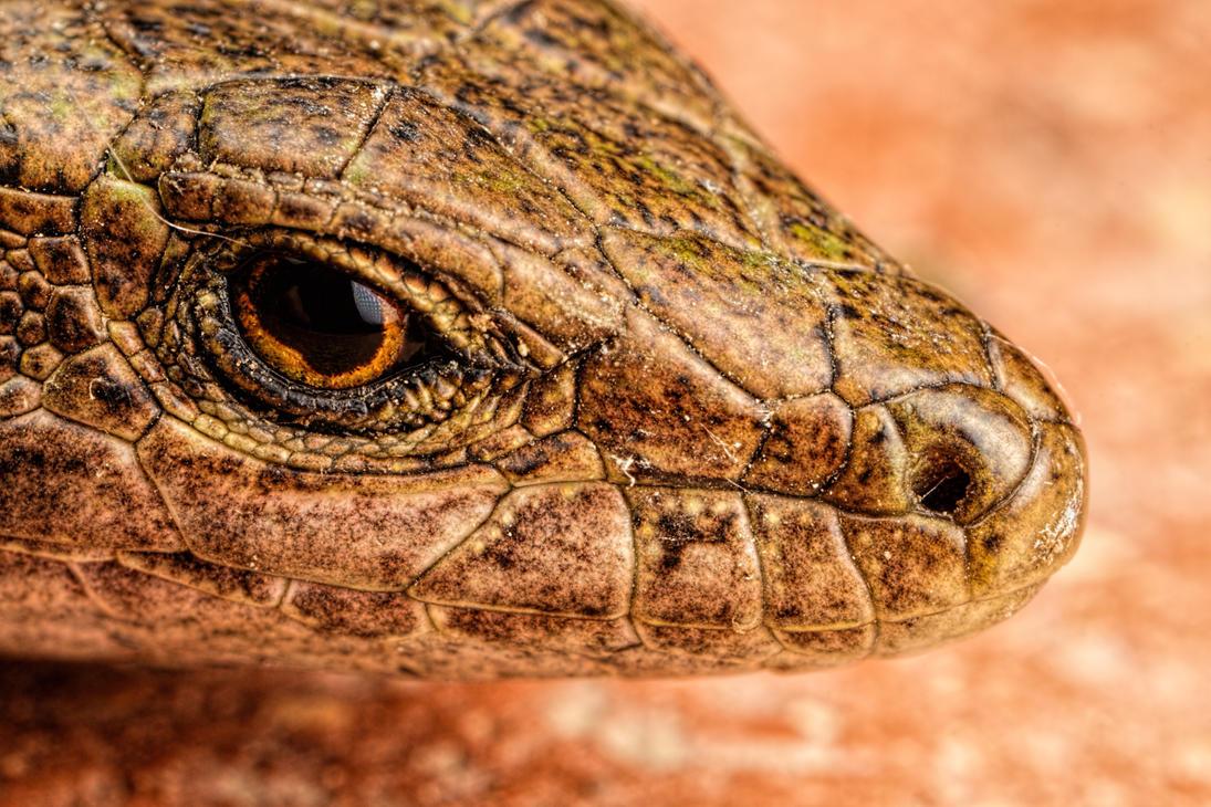 Lizard Portrait by dalantech