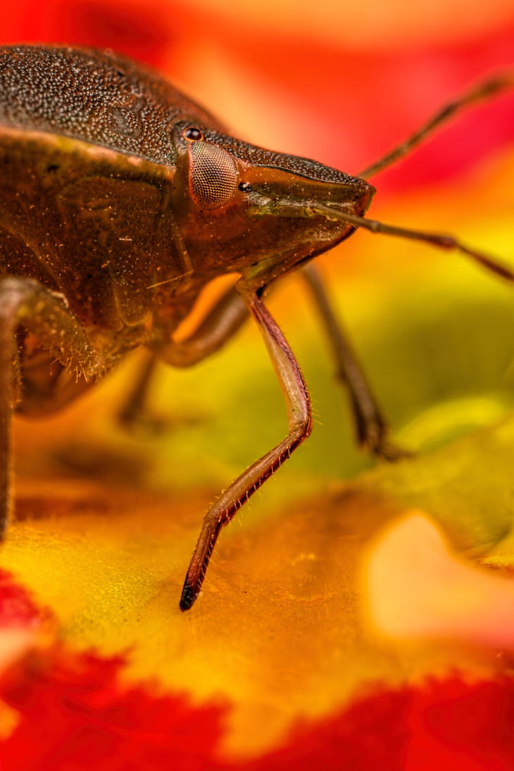 Thirsty Shield Bug by dalantech
