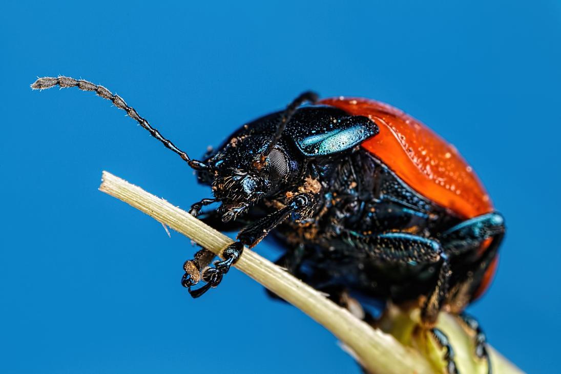 Beetle at 2x by dalantech