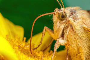 Hungry Moth I by dalantech