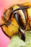 Wool Carder Bee Series 1-3