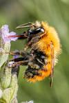 Feeding Bumblebee Series 1-2 by dalantech