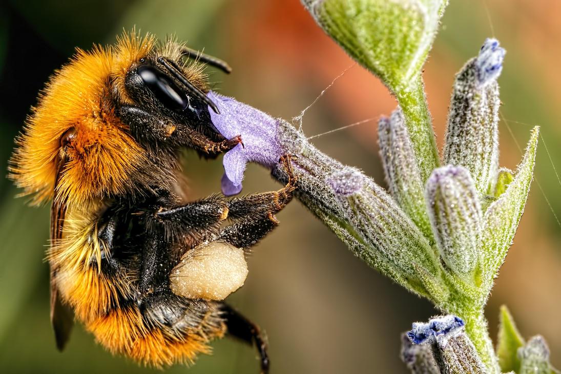 Feeding Bumblebee Series 1-3 by dalantech