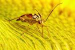 Feeding Plant Bug