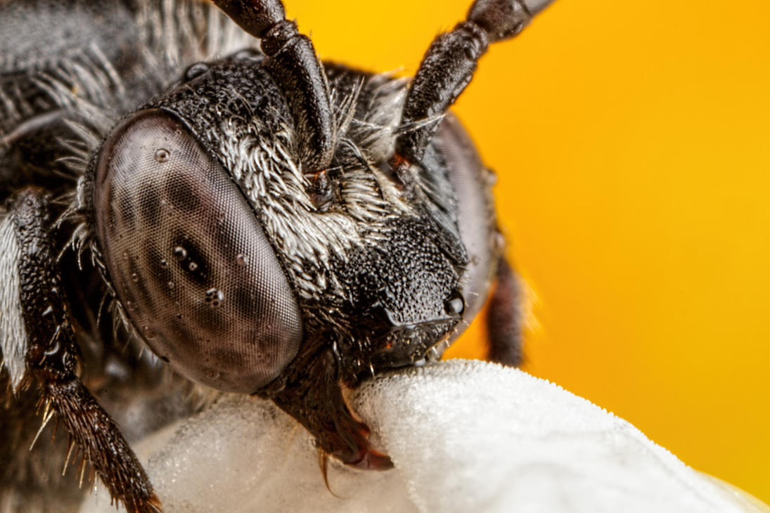 Cuckoo Bee Series 2-3 by dalantech