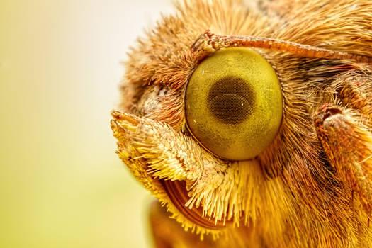 Moth at 4x