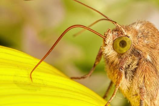 Feeding Moth