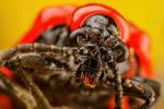 Scarlet Lilly Beetle Series 1-3