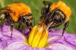 Bumblebee Studio Series 1-1