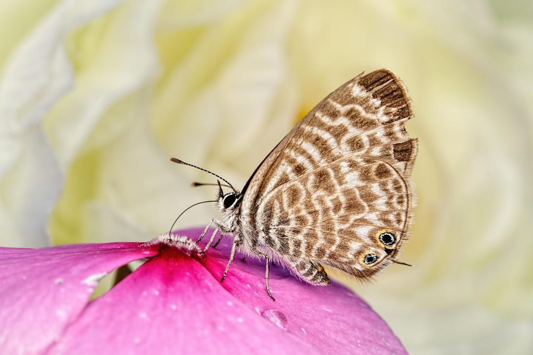 Butterfly in a Wallflower Series 1-1 by dalantech
