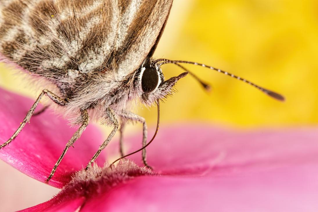 Butterfly in a Wallflower Series 1-2 by dalantech