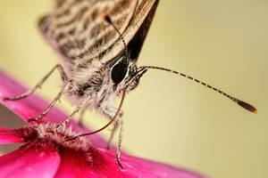 Butterfly in a Wallflower Series 1-3 by dalantech