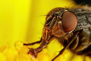 Feeding Fly by dalantech