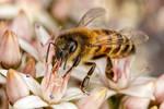 Feeding Honeybee IV