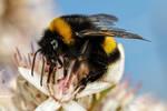 Baited Bumblebee Series 1-2