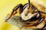Mason Bee Series 1-2