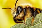 Mason Bee Series 3-1