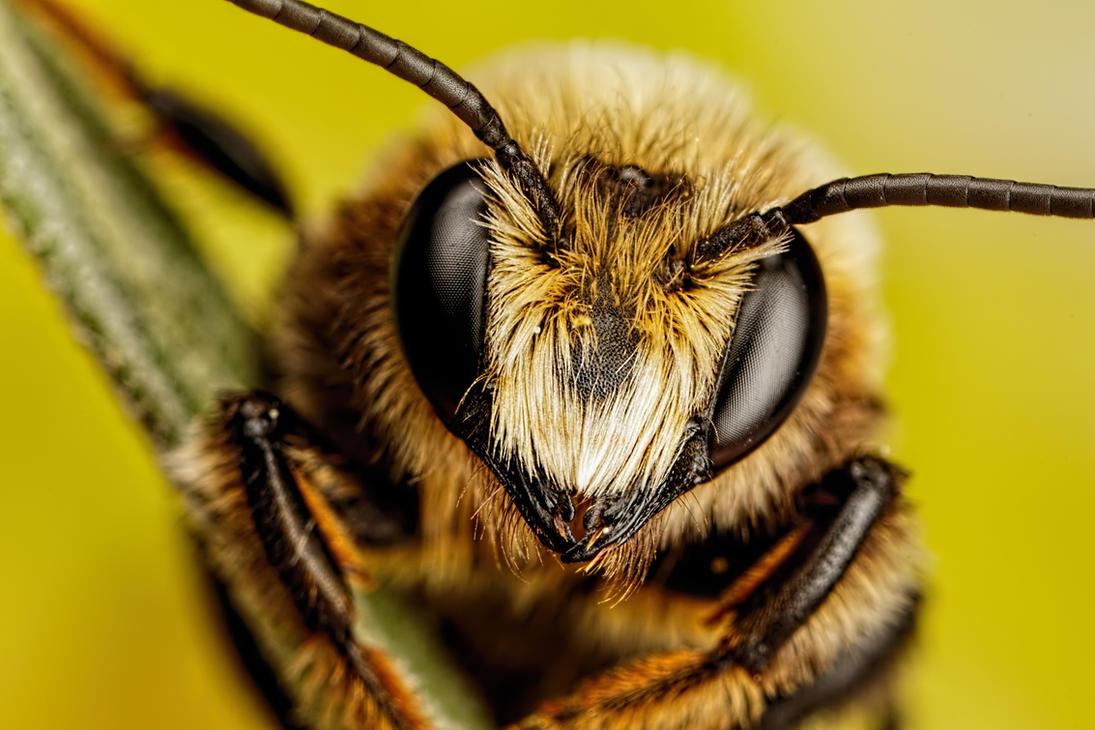 Mason Bee Series 3 2 By Dalantech On Deviantart