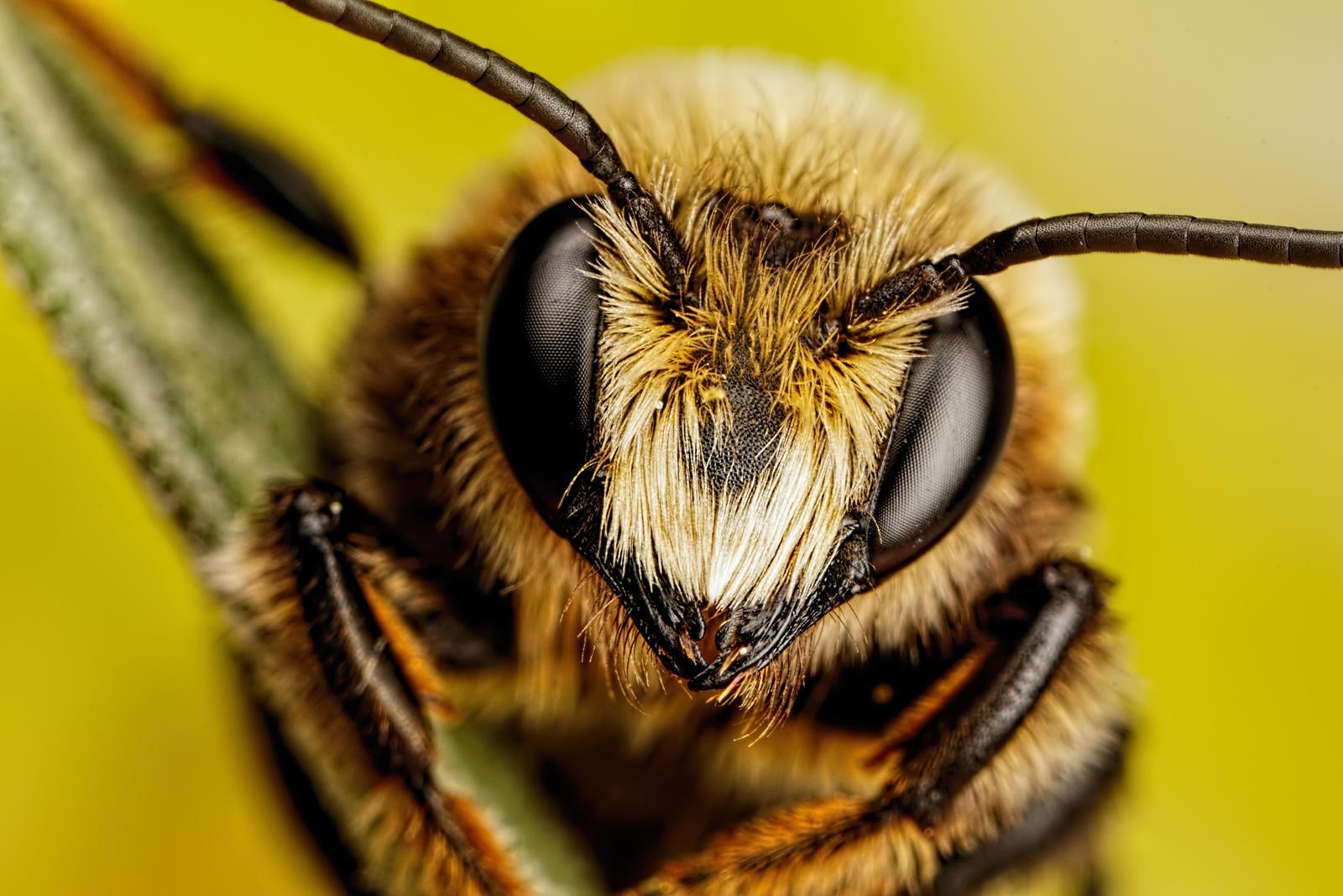 Mason Bee Series 3-2 by dalantech