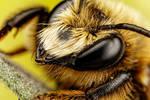 Mason Bee Series 3-3