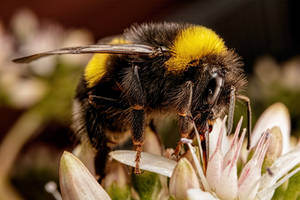 Feeding Bumblebee by dalantech