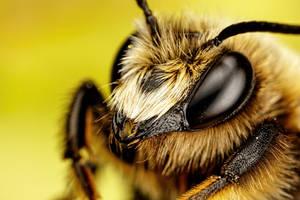 Mason Bee I by dalantech
