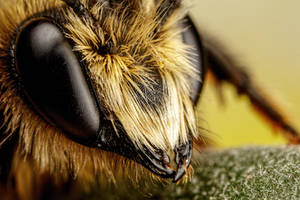 Mason Bee III by dalantech