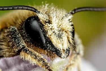 Mason Bee V by dalantech