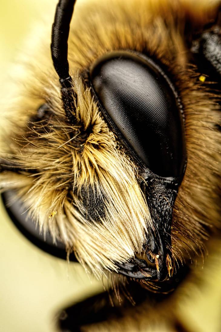 Mason Bee VII by dalantech