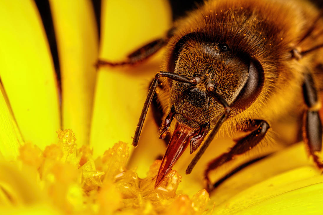Feeding Honeybee V by dalantech