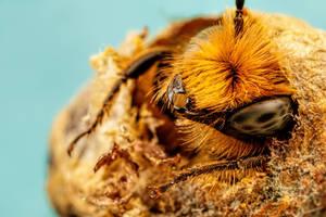Blue Mason Bee Birth Day by dalantech