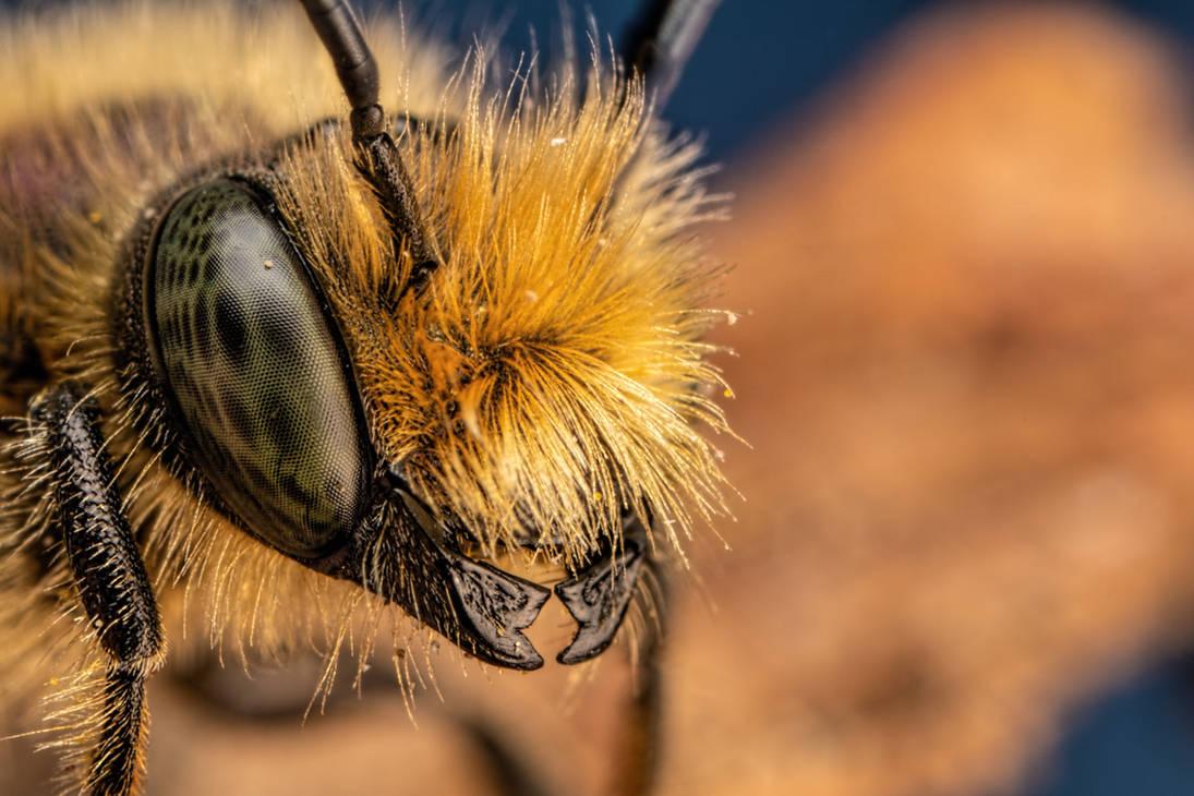 Blue Mason Bee II by dalantech