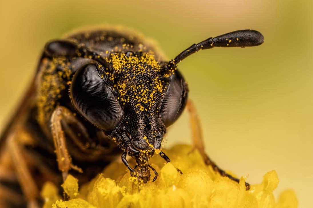 Feeding Sawfly by dalantech