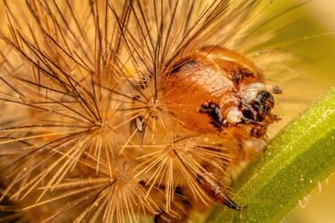 Caterpillar by dalantech