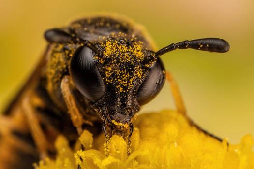 Feeding Sawfly II