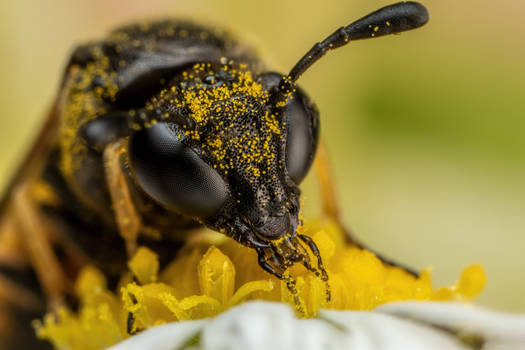 Feeding Sawfly III