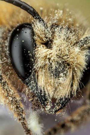 Mason Bee XIII
