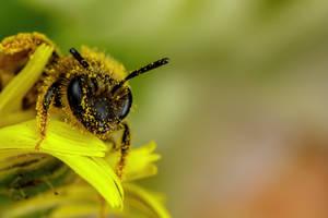 Mining Bee II