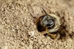 Mining Bee IV
