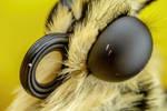 Swallowtail Portrait III